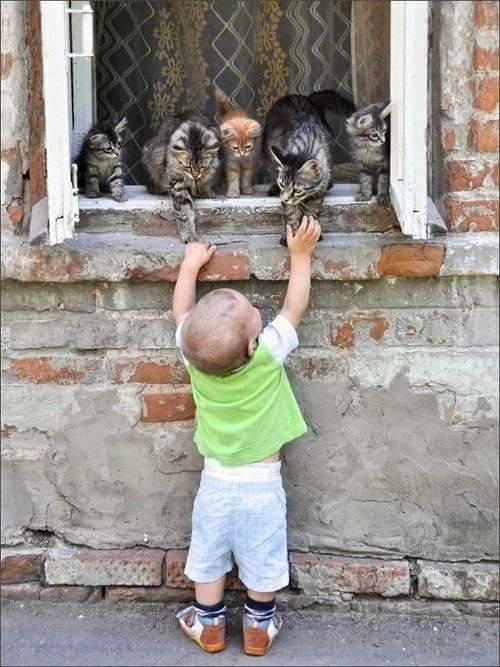 7 beneficios que obtienen los niños al tener un gato en el hogar