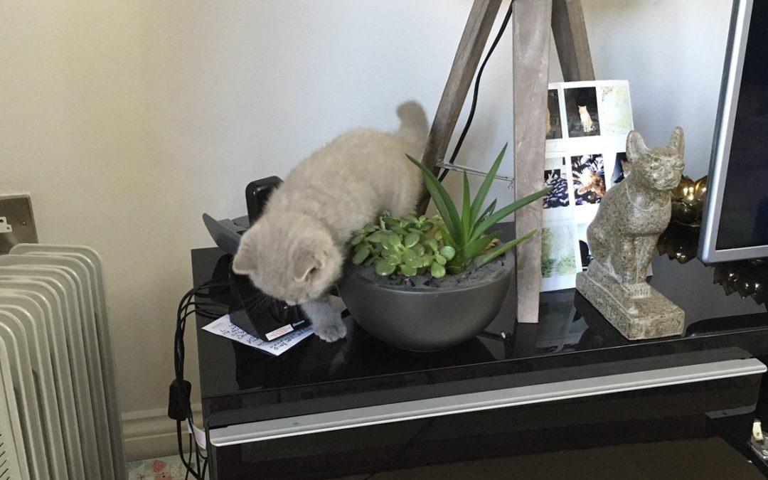 10 Peligros comunes para gatos en el hogar. ¿Los conoces?