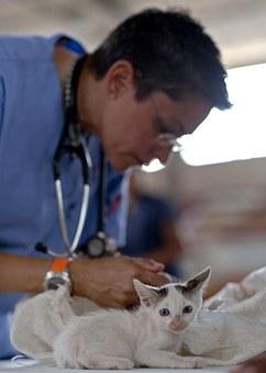 5 creencias populares para no esterilizar a las mascotas y por qué sí debes hacerlo