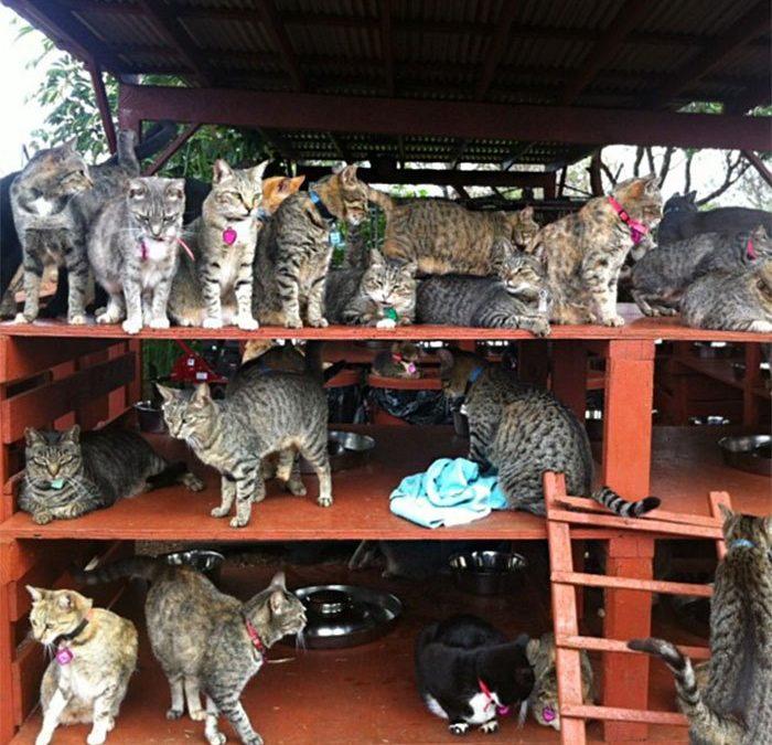 Santuario Lanai, en Hawaii, un paraíso de gatos….