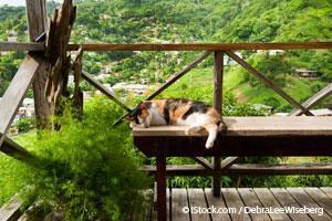 ¿Sabes en qué consiste el exterior seguro ó Catio para tu mascota?