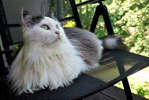 ¿ Sabes por qué los gatos vuelven a su hogar?