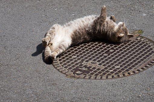 ¿Por qué mi gato se revuelca en el suelo?