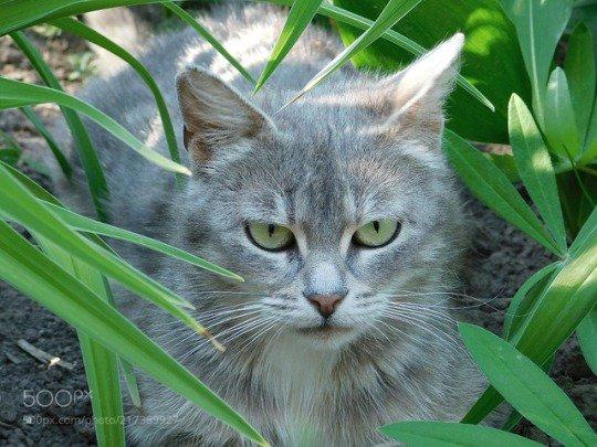 8 Síntomas de diabetes en el gato