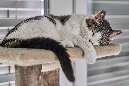 Bèlgica, el primer paìs en exigir que los gatos sean esterilizados ò castrados